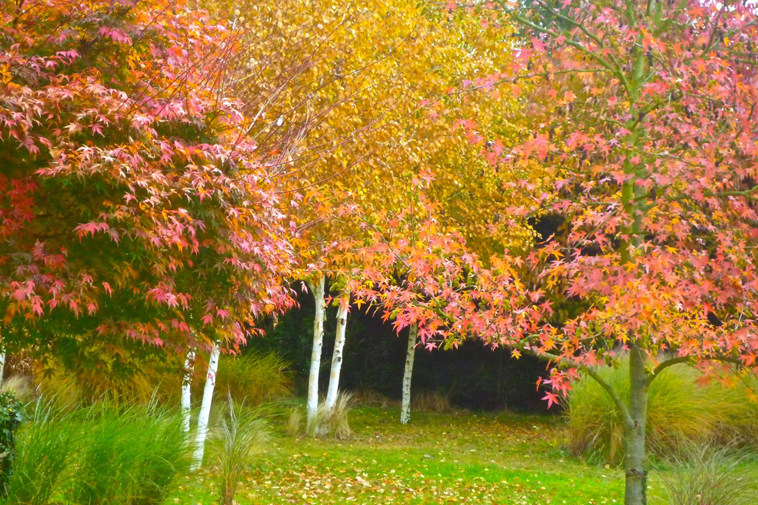 jardin automne bnb